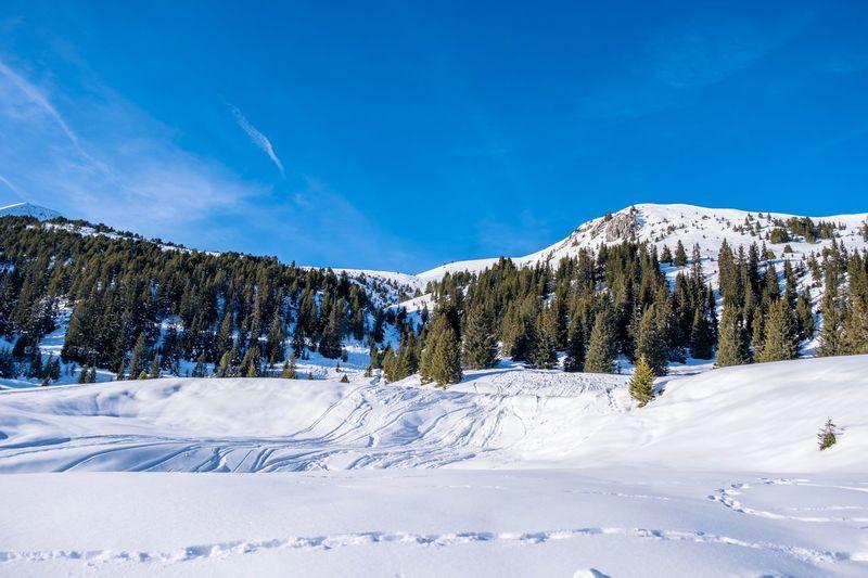 Snowscape, Arosa, Switzerland Switzerland Switzerland🇨🇭 Arosa Snow Winter Cold Temperature Sky Mountain Tree Beauty In Nature Plant Scenics - Nature Tranquil Scene White Color Nature Land Day Landscape Non-urban Scene