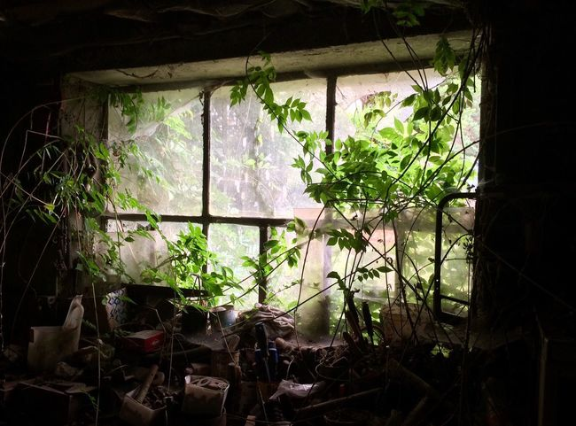 Table Window Growth Plant Indoors  Leaf Green Color No People Home Interior Day Greenhouse Nature Tree Abandoned Abandoned Places Table Nature DIY Breathing Space The Week On EyeEm EyeEmNewHere