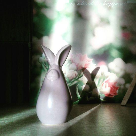 Animal заяц сувениры обожаю милые блин вещи)))