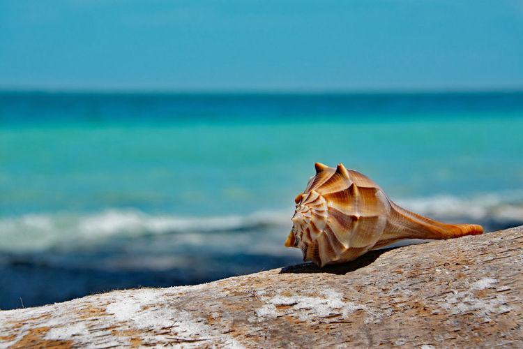 Close-up of seashell on wood against sea
