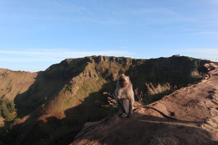 Monkey sitting on a mountain