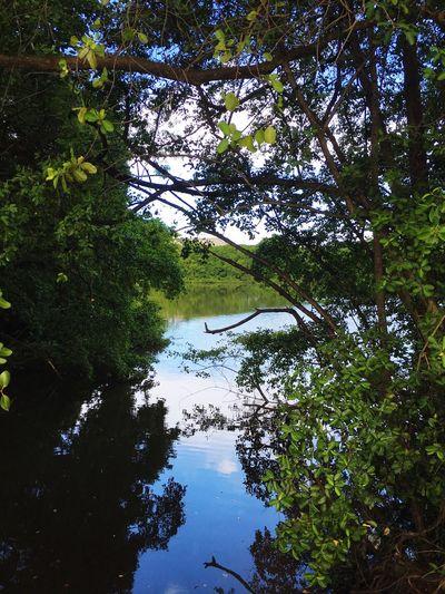 Morning walk. EyemPuertoRico Color Portrait Nature_collection EyeEm Nature Lover
