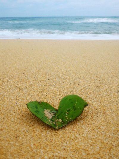 Leaf on sandy beach