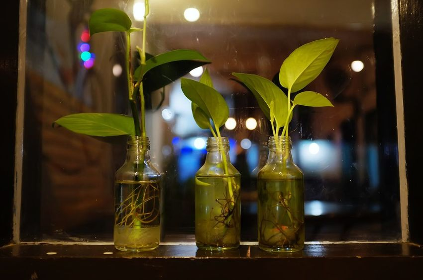 DIY Leafs Plant Bottle Close-up Flower Focus On Foreground Fragility Freshness Glass Glass - Material Green Color Illuminated Indoors  Leaf Nature Night No People Plantation Table Vase Vine