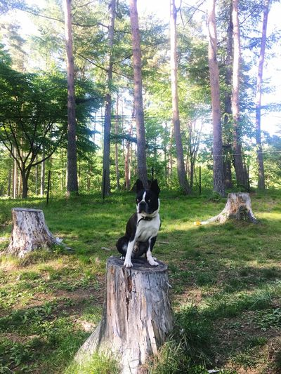 Dog Tree Pets One Animal Day Nature Outdoors