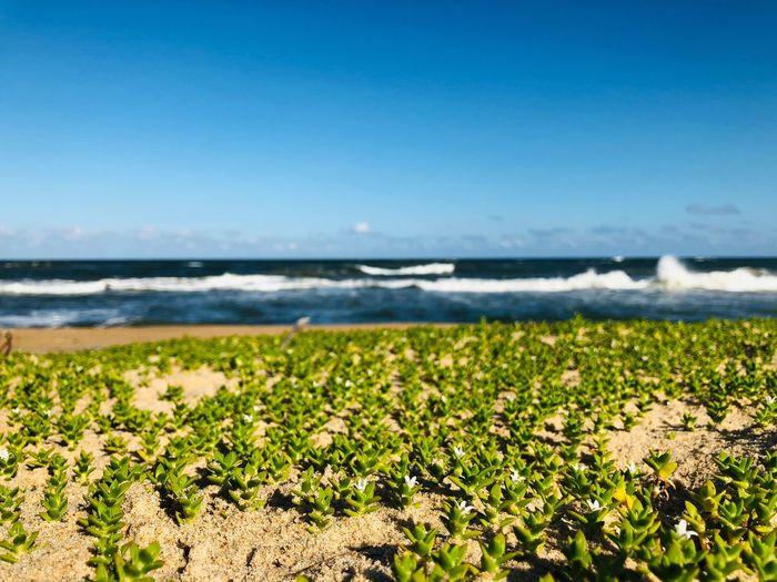 Beach 🇲🇬