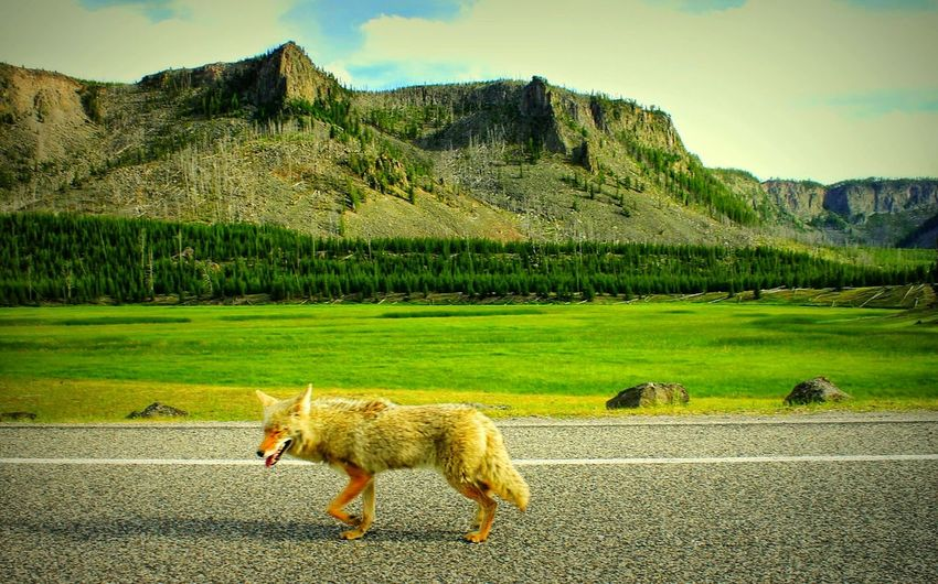 Dog on road against mountains