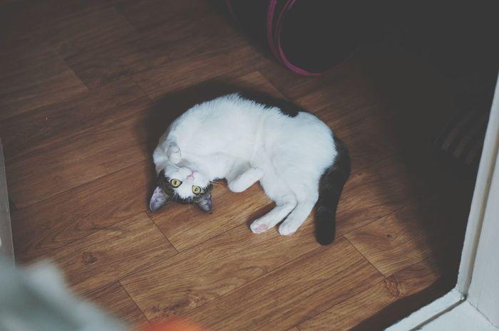 애교 부린다고 넘어갈것 같지? Yomi Cat