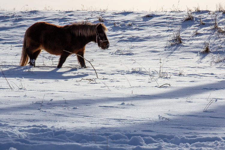 Horse standing on snow covered field