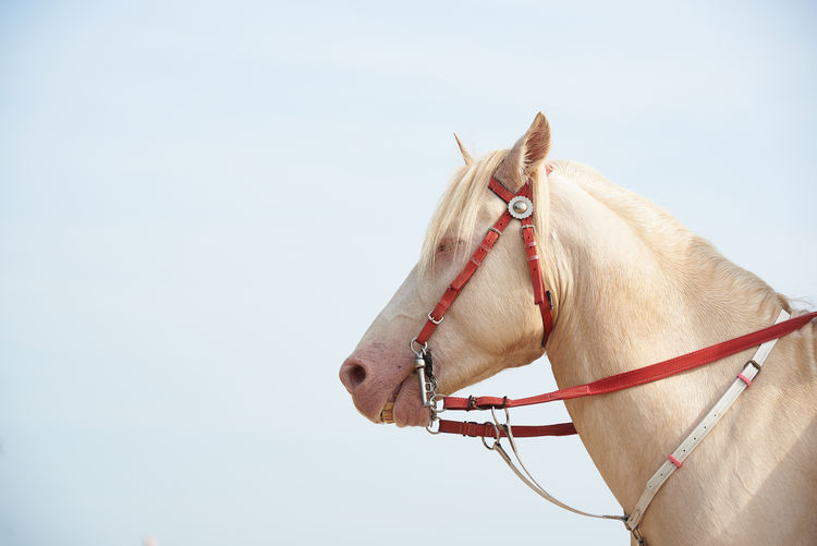 Side view of white horse standing against sky