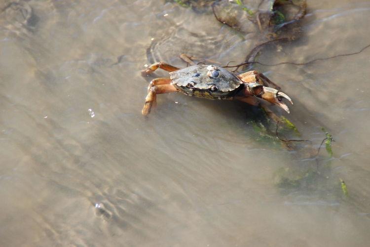 EyeEm Selects Outdoors Animal Themes No People Water Nordseeküste Krabbe