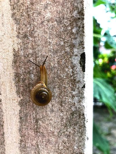 Snail One Animal Animal Themes Wildlife Gastropod Animals In The Wild Outdoors No People Day Close-up Nature Fragility Building Exterior Slug