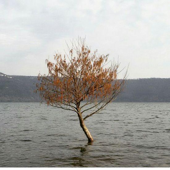 Tree Lake Castel Gandolfo  Rome Autumn Nature Over Nature