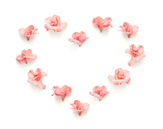 Close-Up Of Flowers Arranged In Heart Shape Against White Background