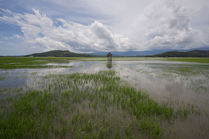 Paddy field Lake Landscape Water Reflection Nature Green Color Outdoors Cloud - Sky Springtime Beauty In Nature Rural Scene People Mountain Day Sky Village Calm Freshness Rice Paddy Agriculture Scenics Tranquility Beauty In Nature Grass Backgrounds