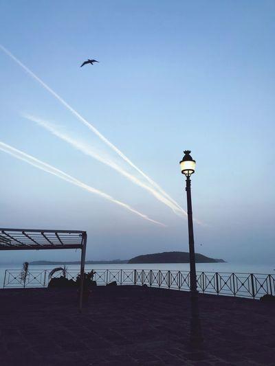 Seagull flying over street light against sky