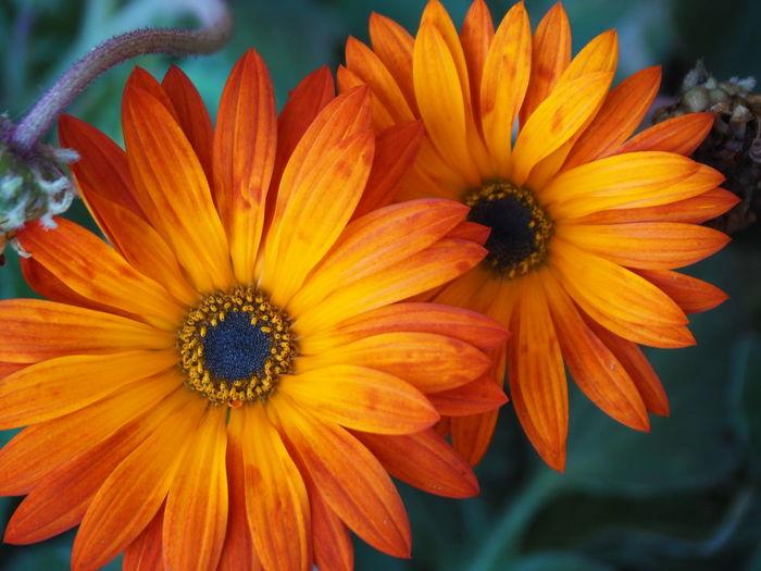 Close-up of orange flower in park