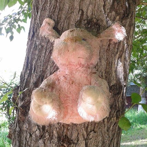 Собака выглядит как собазомби омск сибирь садизм собаку прибили к дереву Sadism Dog Nail to tree Crusified