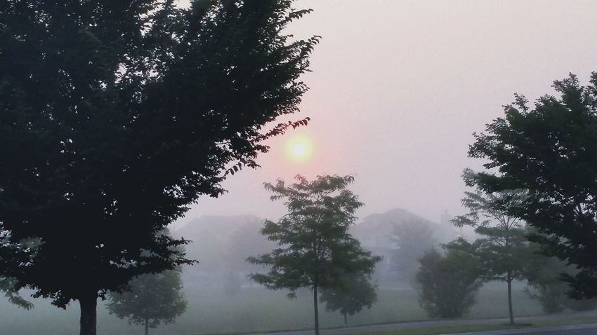 Fall Morning Nature