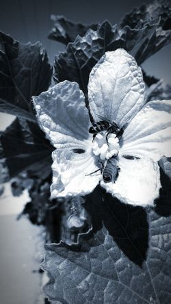 Plant Blossom Black And White Collection  Eyeem Marketplace Monochrome _ Collection Popular Monochrome Photography Flower Stamen Black And White Nature Photography Monochrome Nature Flower Photography Leaves🌿 Stamen Of The Flower EyeEm Best Shots - Nature Wasps🐝 Insect Photography Macro Insect On A Flower Black And White Photo ♡♥♡♥♡♥ The Week Of Eyeem Flower Porn Nature Close-up Flower Flower Head Petal