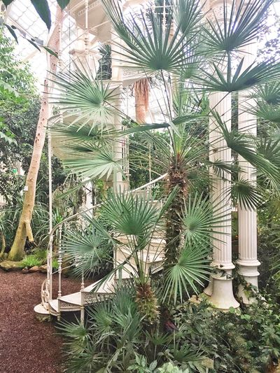 Viennese Jungle Schönbrunn Palmenhaus Botanical Garden Flora Botanic Vienna Growth Cactus Plant Green Color Nature Palm Tree No People Tree Beauty In Nature