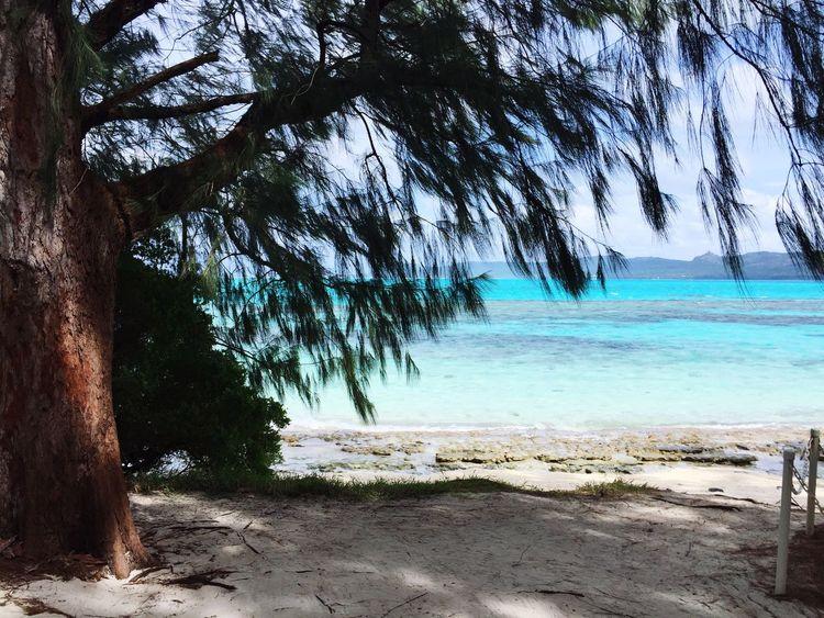 Mañagaha Island Saipan Beach Tree Sea Ocean