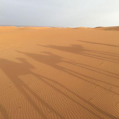 Desert Sand Camel Sahara Sahara Desert Sahara Sand Saharadesert Nature Natural Light Merzouga Merzougadeserts Ripple Mark