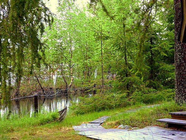 Forest Beauty In Nature Tranquility Outdoors Green Color Tree Green Color Iloveolddoors 💜life Is Good Summer Vibes Ilovenature Landscape Naturelovers Naturephotography No People Arctic Summer Water Lapland, Finland Arctic Light After Rain Rovaniemi, Finland 💙 Amazing Day