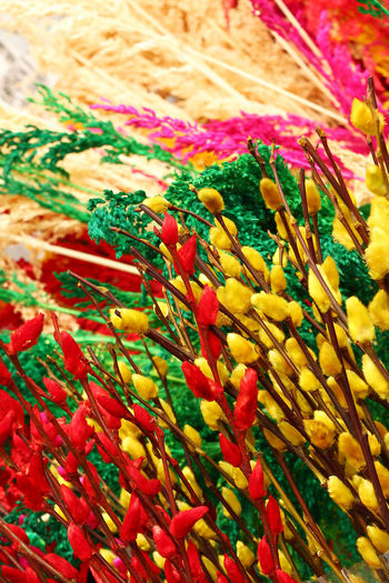 Branches of painted yellow, pink, red, blue and green colors willow on a flower Vietnam. Bright Colors Celebration Easter EyeEmNewHere Freshness Happy Market Nature Tết Vietnamese New Year Bouquet Chinese New Year Close-up Colorful Day Decorations Easter Decoration Eastern Culture No People Season  Selective Focus Spring Spring Flowers Willow Willow Tree