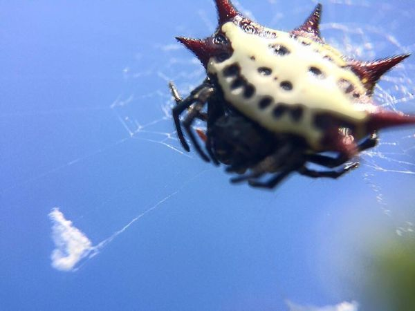 The Moment - 2015 EyeEm Awards Check This Out Macro Macro Photography Aminals Spider Cool Enjoying Life