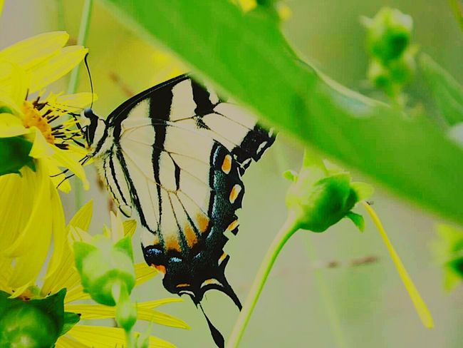 Edited butterflies Butterflies Are Free Enjoying Life Summer2015