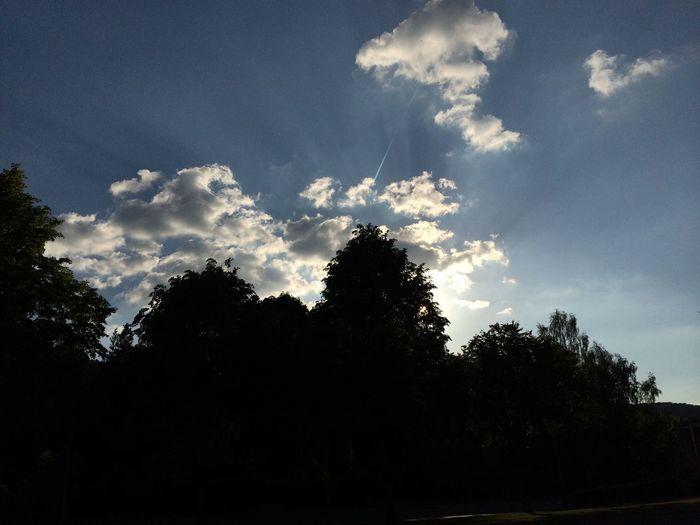Sun Light Sky And Clouds Tree