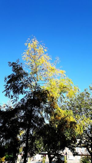 Tree Low Angle View Sky Clear Blue Sky One Bird Flying No People Day Outdoors The Week On EyeEm Paint The Town Yellow