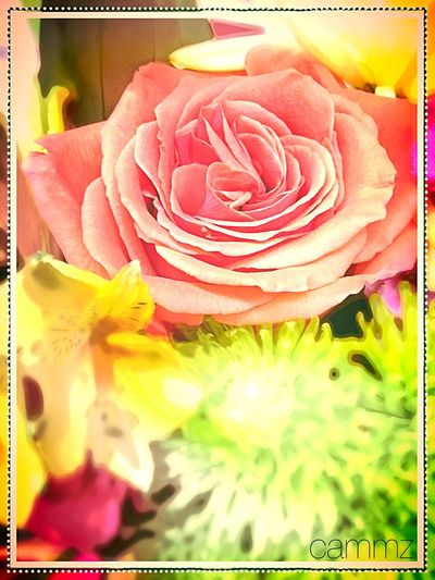 Love Blooms Cammz