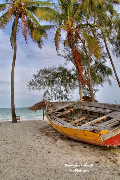 Tree Palm Tree Beach Nature Sea Tranquility Water Beauty In Nature Day No People Outdoors Sand