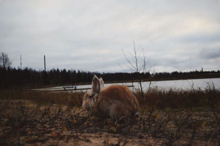 Animal Themes Field Domestic Animals Nature Mammal No People Sky Tree Beauty In Nature Grass Sheep Landscape Outdoors Day Rabbits Rabbit Check This Out EyeEmNewHere