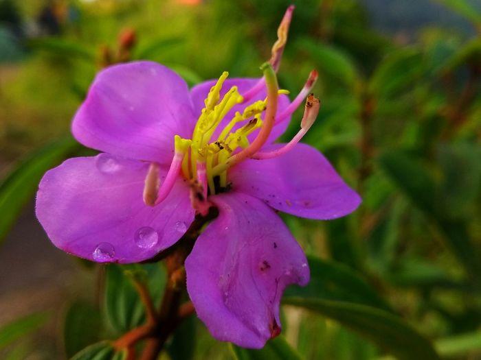 fresh flower in