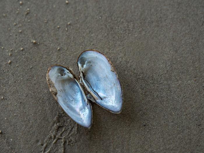 High angle view of shell on sand