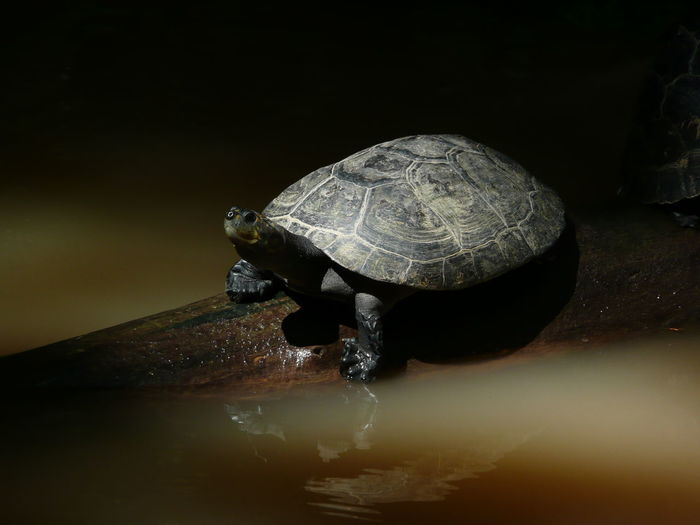Close-up of turtle in water