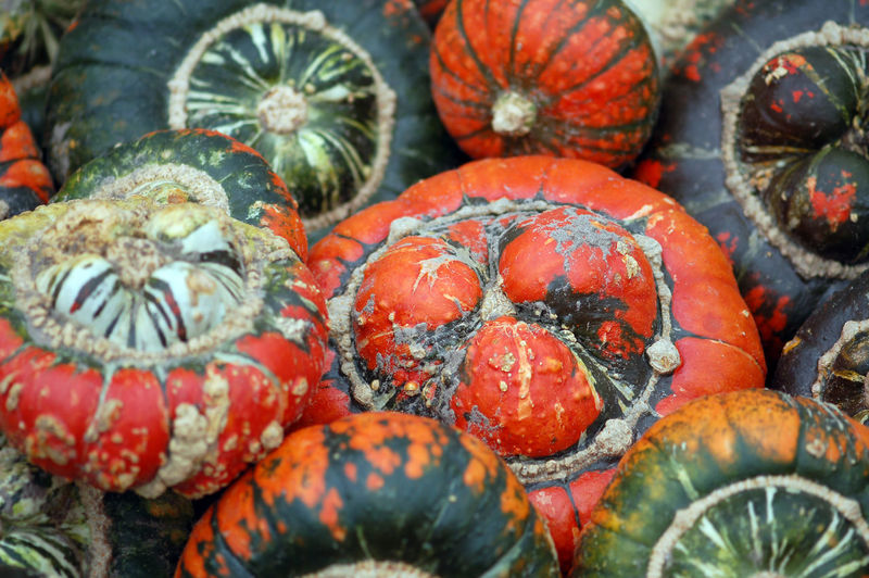 group of colorful red, grey, green mini pumpkins Pumpkin Orange Color Group Full Frame Fresh Vegetables Vegetables Vegetable Vegetable Market Vegetables & Fruits Red Red Color Alot Helloween🎃🎃🎃 Pumpkins