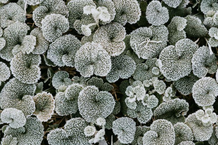 Full frame shot of frozen leaves