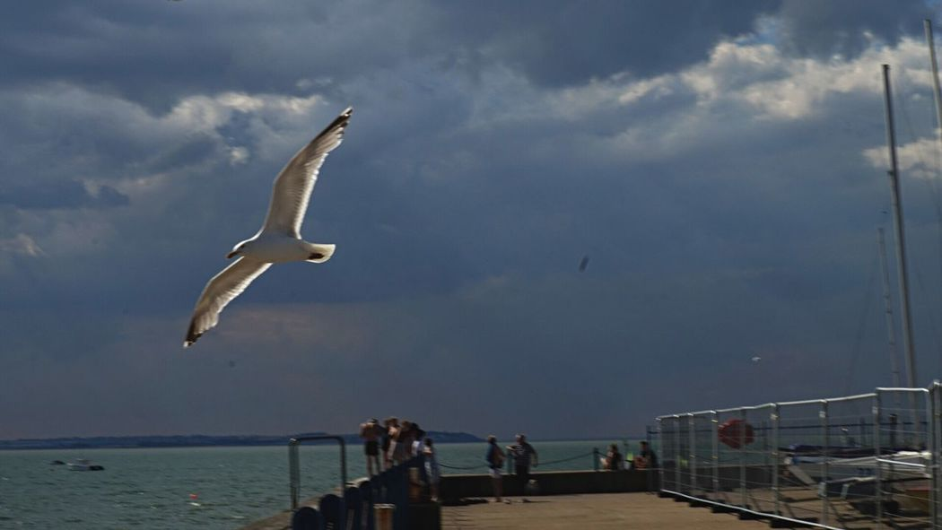 Sea Sky Water Cloud - Sky Bird Flying Animal Themes Nature Seagull Large Group Of People Day Horizon Over Water Animals In The Wild Outdoors Beach Real People Beauty In Nature People