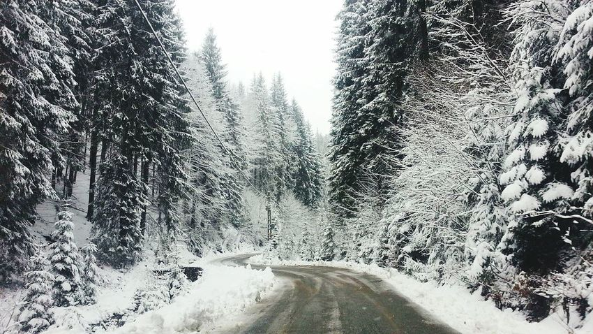 Gutin Mountains, Romania Winter Snow ❄ Trees Route Forrest Photography Black And White Adventure Club One The Way The Week On EyeEem Showcase July Nature Landscape