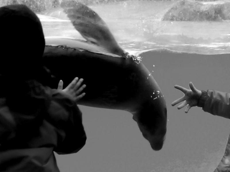 Berlin Berliner Zoo Human Body Part Leisure Activity Real People Sea Life Seehund Seelöwe Swimming Underwater Water Zoo Berlin
