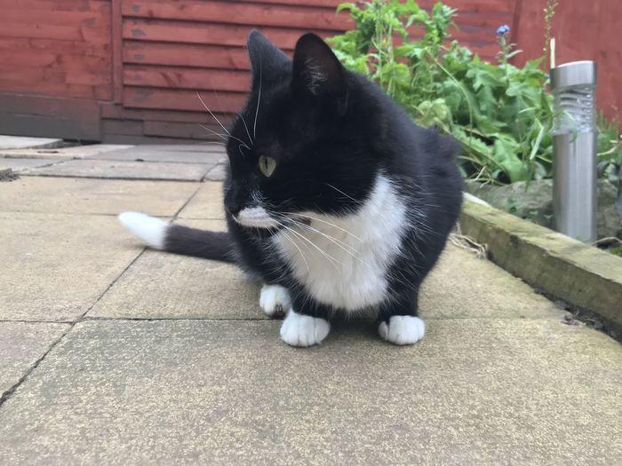 Black cat looking away outdoors