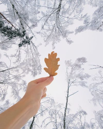 ❄🍁❄︱autumn farewell Samsungphotography Nature_collection Nature Photography VSCO EyeEm Best Shots EyeEmNewHere EyeEm Nature Lover First Eyeem Photo The Week on EyeEm Minimalism Trees White Winter Wonderland Snow Lookingup Leaf Autumn Human Hand Human Body Part One Person People Tree Nature Winter Day Sky
