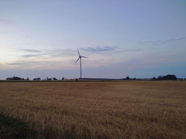 Wind Turbine Fields Dusk