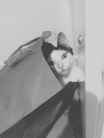 Achei o gato 🙀