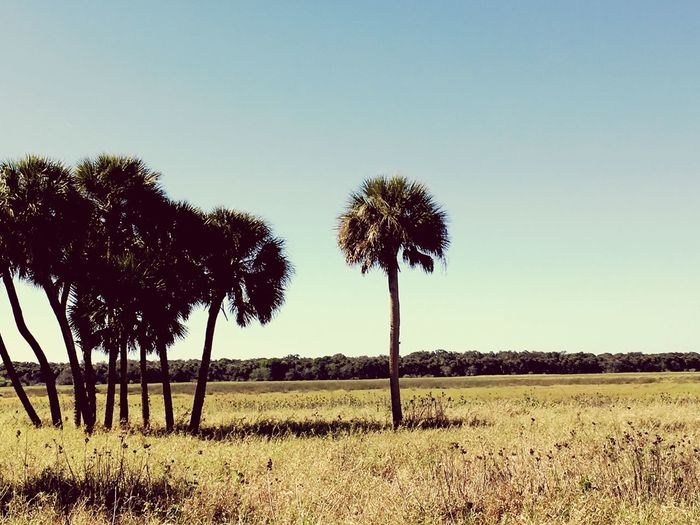 Tree Clear Sky Tranquil Scene Nature Beauty In Nature Field Tranquility Landscape Scenics Outdoors Tree Trunk Growth No People Day Grass Sky Palm Tree Breathing Space Lost In The Landscape