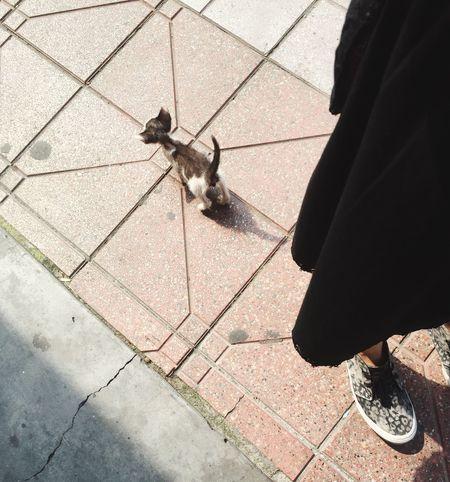 A mimi near a real Mimon J Taking Photos Hello World